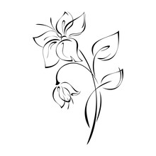 Decorative Flower And Flower B...