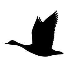Goose Canadian, .vector Illustration,black Silhouette ,profile