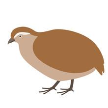 Partridge,  Vector Illustration, Flat Style ,profile