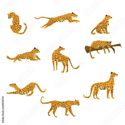 Set of leopards in various poses cute trend style, animal predator mammal, jungle Wall mural