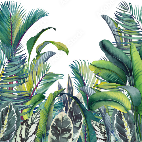 Obrazy dżungla   tropical-card-with-palm-trees-banana-and-calathea-leaves-watercolor-illustration-on-white-background