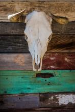 A Bleached Skull Of A Steer Ha...