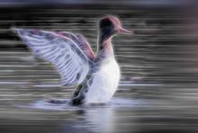 Luminous Duck Taking Flight Fr...