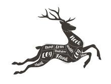 Deer Meat Cutting. Menu For Restaurant Or Butcher Shop. Vector Illustration