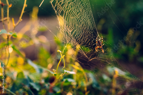 Photo Spider weaving his spider web against a light in a forest.