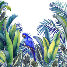 Tropical Card With Blue Macaw Parrot, Palm Trees, Banana And Calathea Leaves. Watercolor Illustration On White Background.