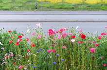 Border Of Wild Flowers In City Environment, Blurred Person Running In The Back. Selective Focus