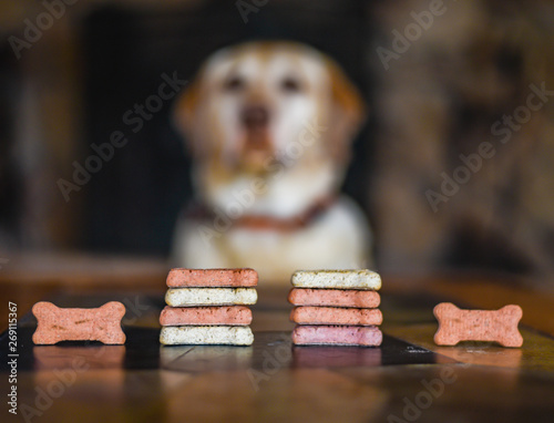 Dog biscuits treats in bone shape stacked in the foreground, with patient well-trained, obedient dog (yellow Labrador retriever) waiting in the background.  Dog training concept sit, stay, leave it.