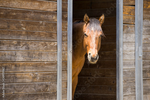 Portrait of horse in barn door. Fotobehang