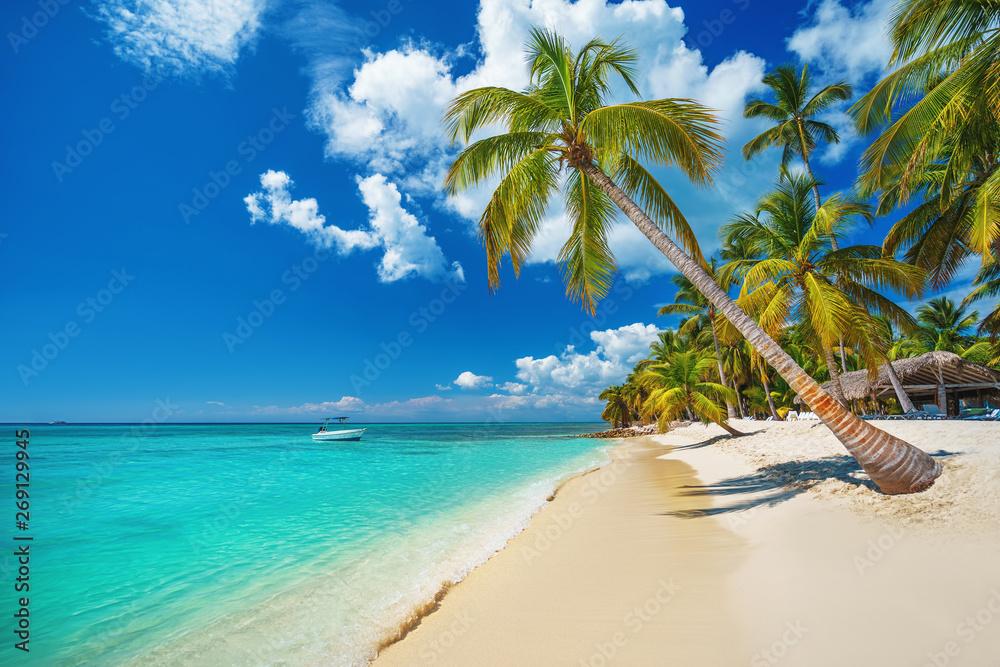 Fototapeta Palm and tropical beach in Punta Cana, Dominican Republic