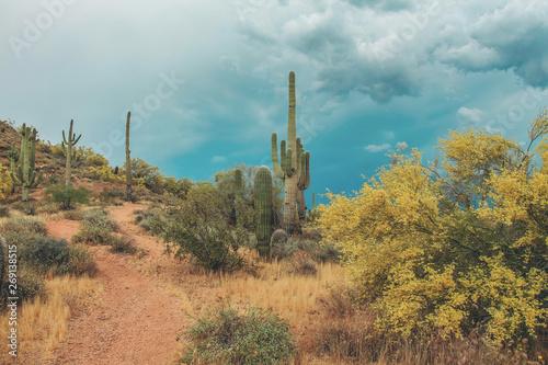 Poster de jardin Desert de sable Saguaros in the stormy Scottsdale Desert