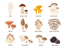 Large Mushroom Set Of Vector I...
