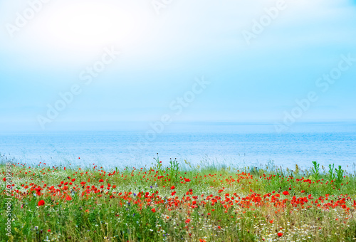 Red poppies field on sea background