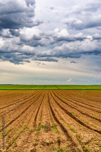 Plowed agricultural field and clouds in the sky Wallpaper Mural