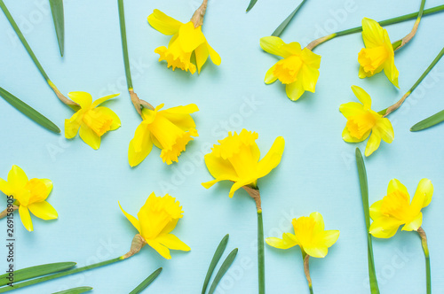 Foto op Plexiglas Narcis Spring floral background. Yellow narcissus or daffodil flowers on blue background top view flat lay. Easter concept, International Women's Day, March 8, holiday. Card with flowers. Place for text