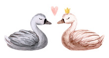Watercolor Swan. Hand Painted Illustration Isolated On White Background. Character Swans For Children's Design