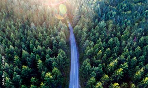 Cadres-photo bureau Route dans la forêt Top view of dark green forest landscape in winter. Aerial nature scene of pine trees and asphalt road.