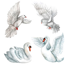 Watercolor Set Of White Pigeons And Swans