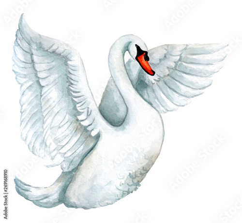 Fotografie, Obraz Watercolor white swan illustration, romantic and beautiful bird