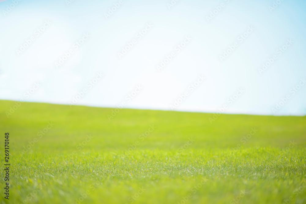 Fototapeta 青空と草原
