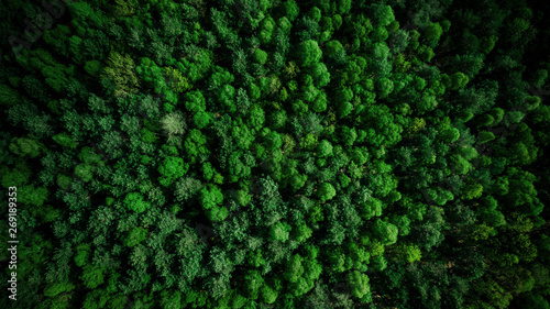 Canvas Print Drone view over green pine forest at summer