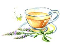 Medicinal Plant Verbena Tea. W...