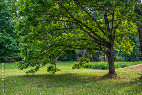 Spoed Foto op Canvas green moss on forestbed in mixed tree forest with tree trunks and green grass