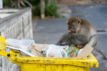Monket Find Something To Eat O...