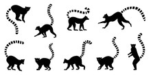 Lemur Silhouette