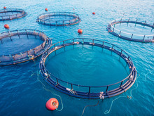 Salmon Fish Farm Aquaculture B...