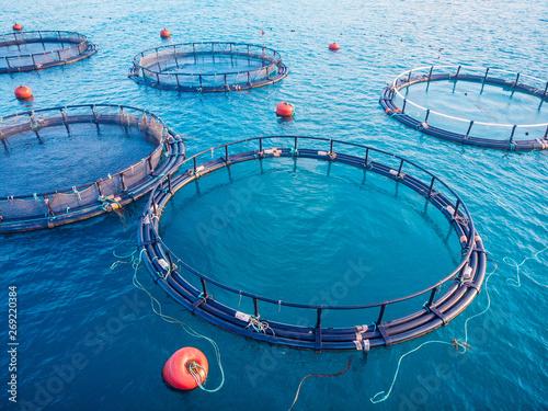 Salmon fish farm aquaculture blue water. Aerial top view Canvas Print