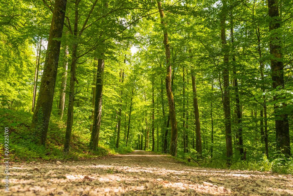 Weg im grünen Wald im Sommer bei Sonnenlicht