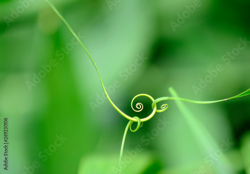 Macro photographie Abstract leaf spiral close-up in a blurred background