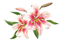 Beautiful Pink Lily. Bouquet O...