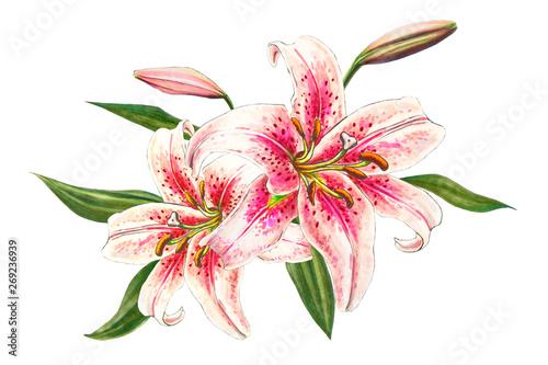 Beautiful pink lily Wallpaper Mural