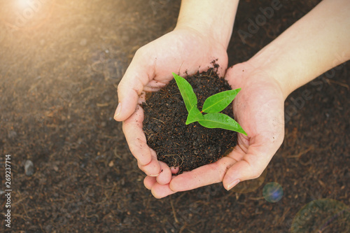 Foto Two hands holding a young green plant, closeup hands environment heal earth day