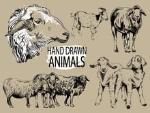 Image Set Farm Animals. Sheep ...