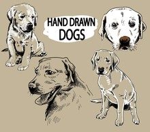 Set Of Images Of Labrador. Dog Breeds. Puppies, Adult Dogs. Freehand Drawing, Vintage Image. Figure Pen.