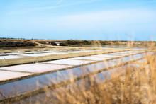 Salt Marsh In Summer Day In Il...