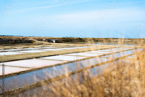 Stampa su Tela Salt marsh in summer day in Ile Re in France