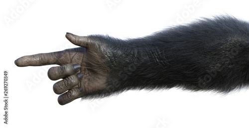 Chimp Hand Pointing Canvas Print