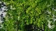 Leinwandbild Motiv Tree Foliage