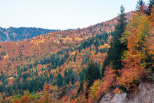 Colorful Trees In The Mountains Of Svaneti In The Fall. Beautiful Landscape