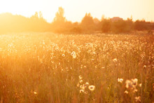 Summer Sunset In The Field. Ev...
