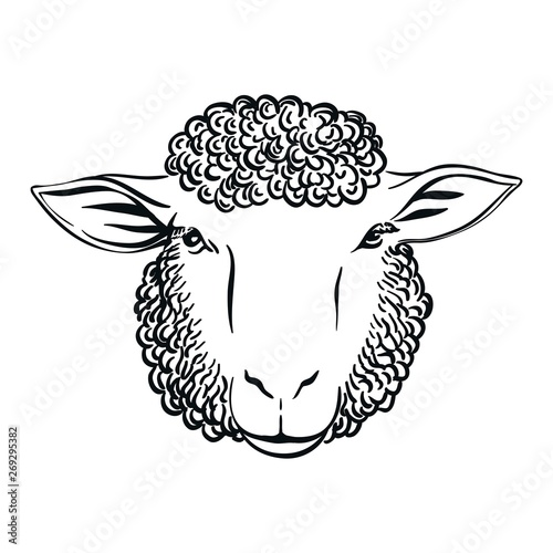 Fototapeta black and white drawing of sheep head full face