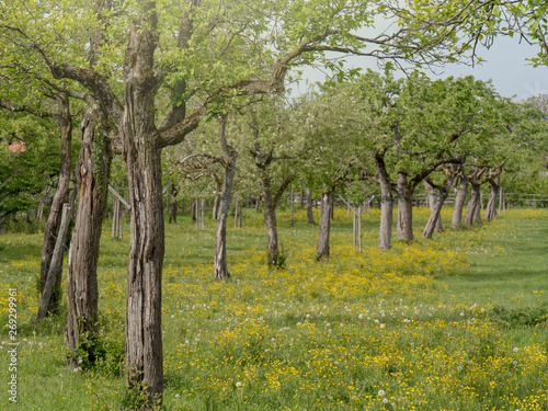 Orchard with many fruit trees in the garden
