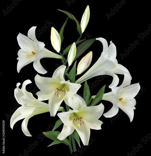 Fotomural pure lilly with six blooms on black