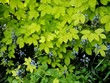Leinwandbild Motiv Climbing Plant