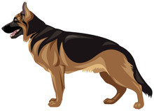 German Shepherd Dog Breed Realistic Color Vector Illustration From The Dog Show Sign Symbol Set
