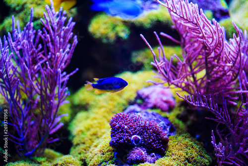 Foto auf Gartenposter Riff Wonderful and beautiful underwater world with corals and tropical fish.